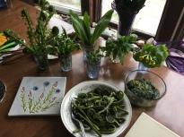 Spring wild edibles